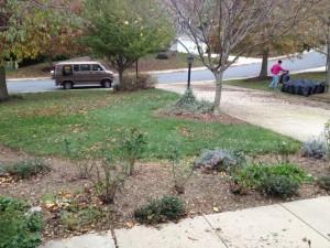 November 21, Fall Cleanup